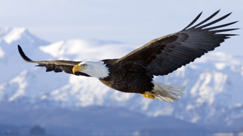 bird-eagle-flying-sky-wings-wallpaper-1920x1080